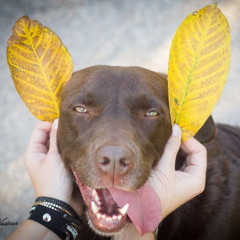Luna loves autumn